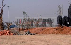 市政设施、园林绿化工程